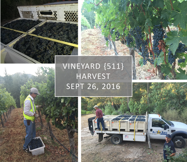 Vineyard {511} Harvest - Sept 26, 2016