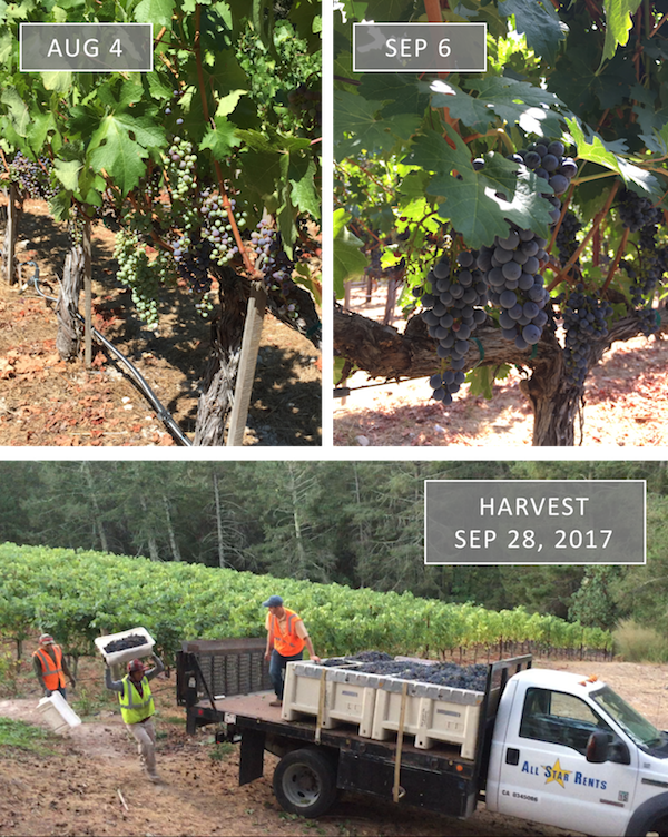 Vineyard Update - Fall 2017