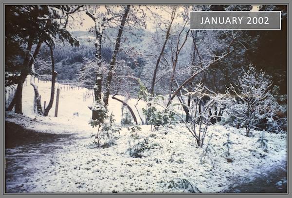 Vineyard {511} Snow - January 2002